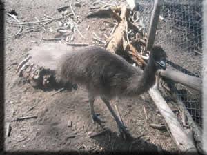 Emu Möbel emu möbel 28 images inshallah de muze eastern michigan eagles