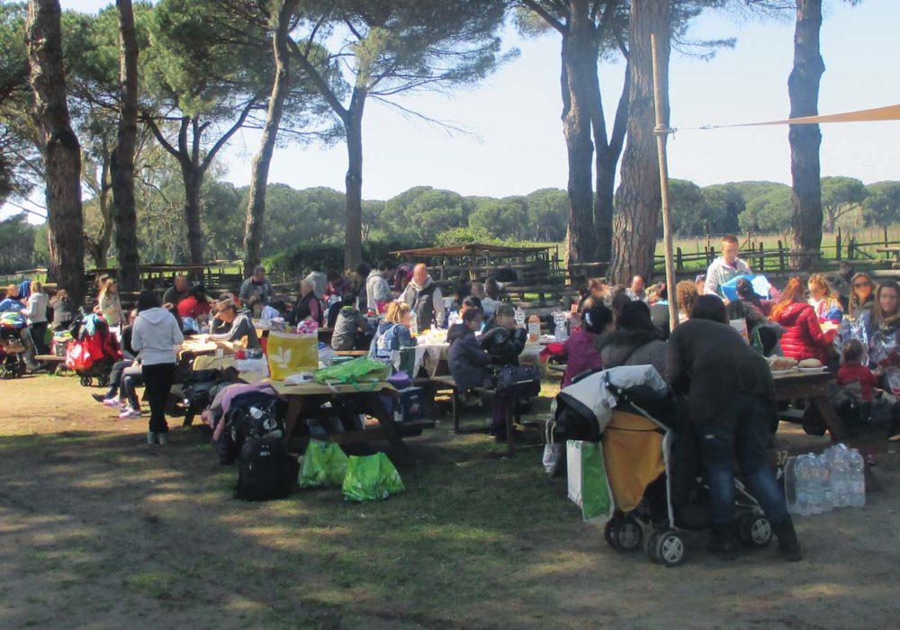 picnic-01